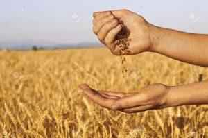 Lo que oculta el campo y las semillas