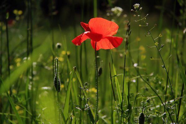 5 plantas exóticas que seguro no conocías