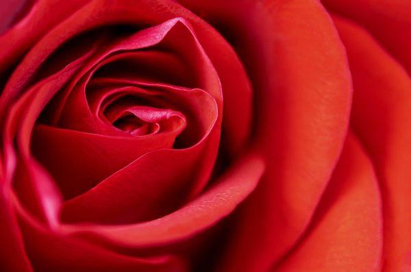 Las 5 flores más bonitas para regalar