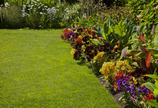 Beneficios de contar con un buen jardín