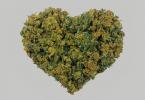 Marihuana legal ¡Sí se puede!