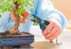 Todo lo que tienes que cuidar un bonsái y que dure muchos años