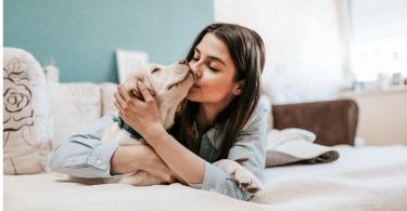 Tipos de mascotas que se puede tener en casa