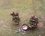 arbustos-y-basura